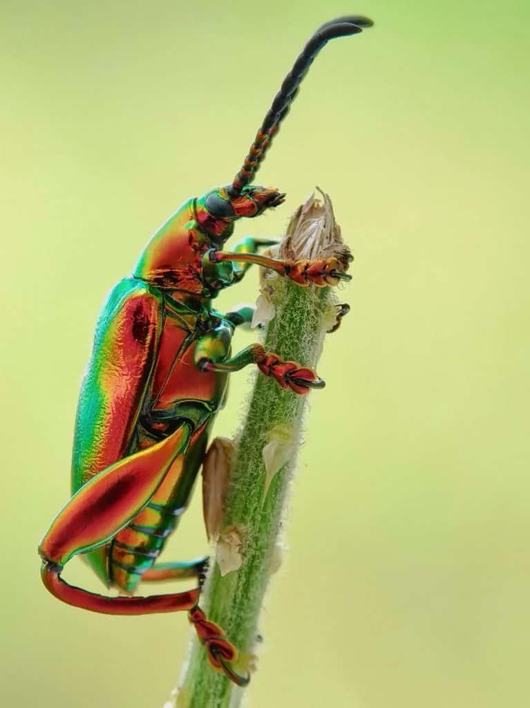 Käfer zum Beitrag Pheromon - Sie riechen dich